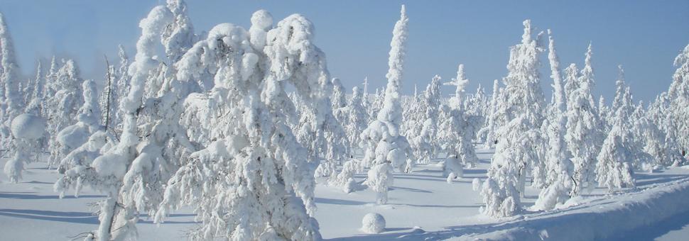 SiberiaSiberia, sin incluir tal llamado Oriente Lejano, se extiende a 13,1 millones de kilómetros cuádrados, mayor que todo Europa